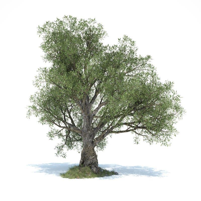 Duży drzewo oliwne 3d ilustrujący ilustracji