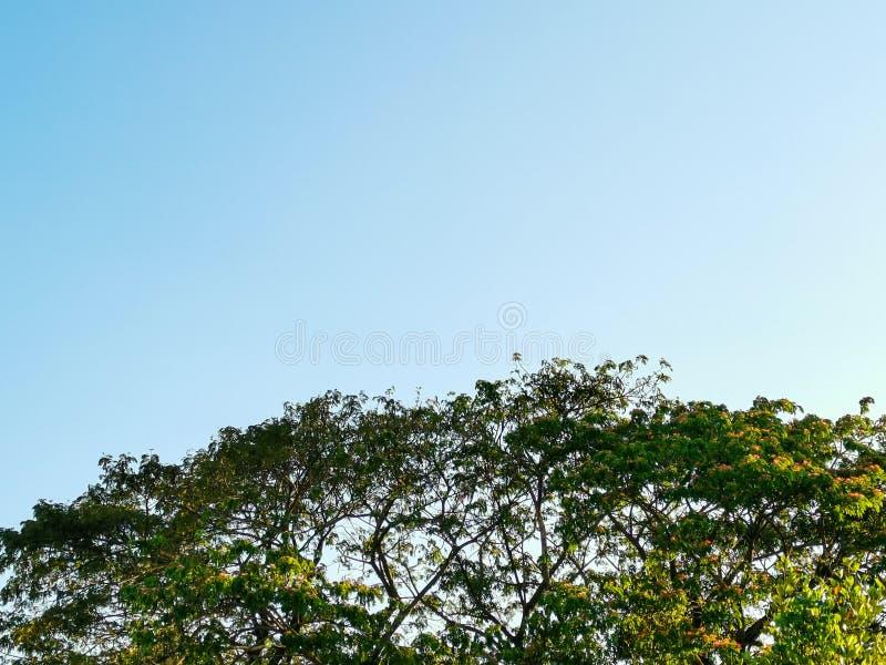 Duży drzewo, piękny kolor i jasny niebo, obraz stock