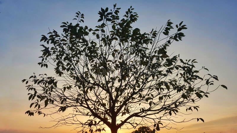 Du?y drzewo w magicznej godzinie s?oneczny dzie? zdjęcia royalty free