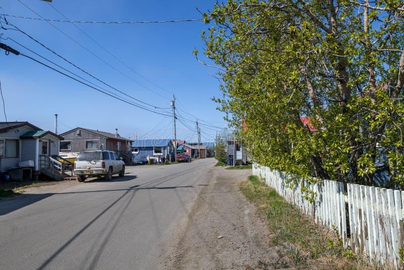 Duży drzewo w Nome zdjęcia royalty free