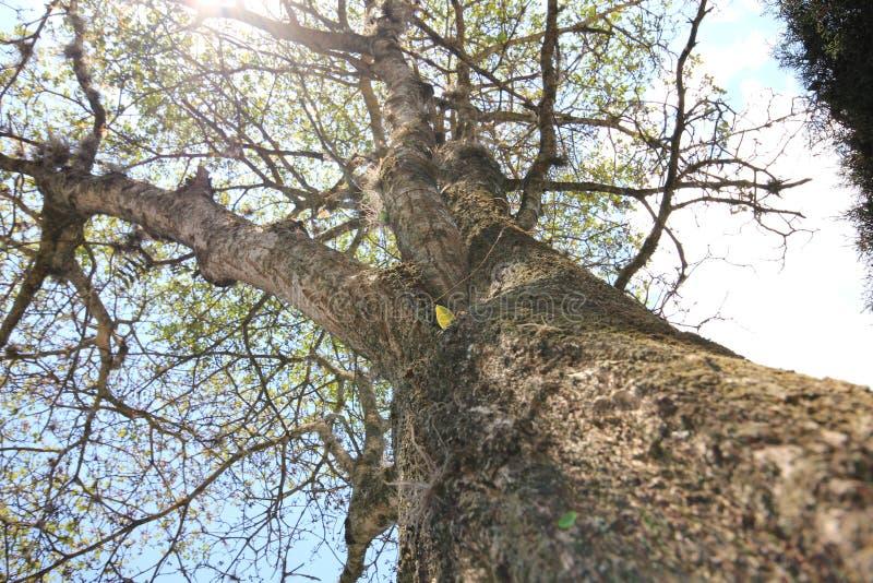 Duży drzewo w słonecznym dniu obrazy stock