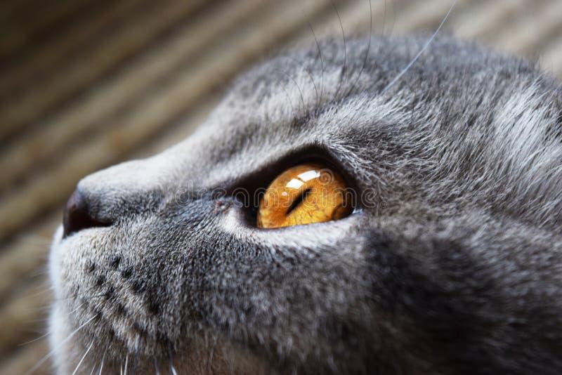 duży kota oczy obrazy stock