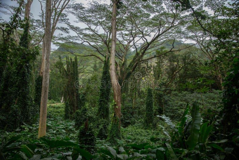 Duży krajobraz w tropikalnym lesie deszczowym obrazy stock
