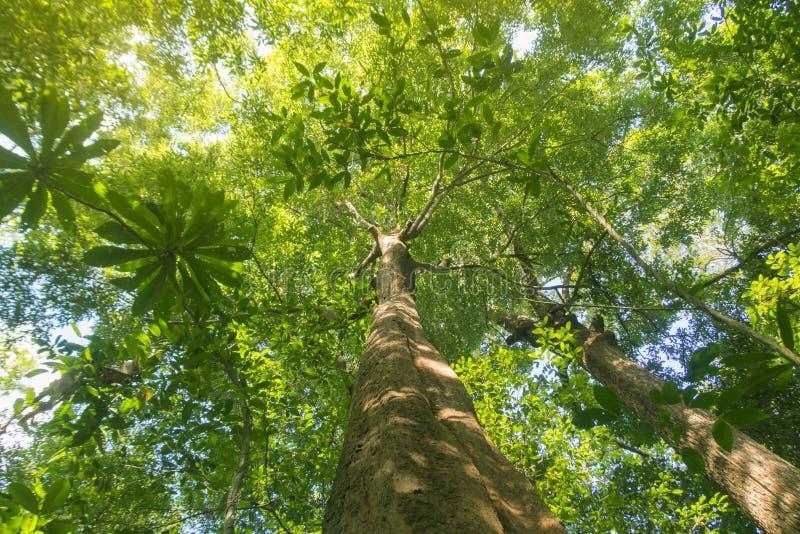 duży lasowi drzewa zdjęcia stock