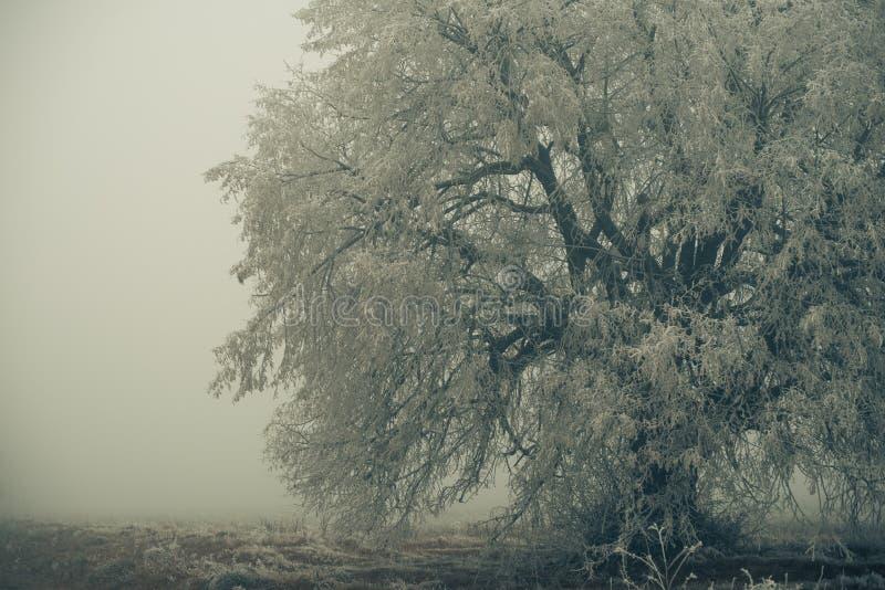 Duży marznący łąkowy drzewo zdjęcie stock