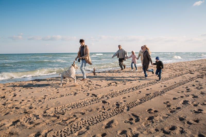 duży multigenerational rodzinny bieg z labradora psem na plaży zdjęcie stock