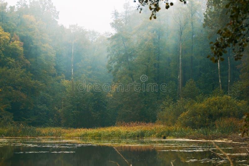 Duży naturalny las na brzeg rzekim, wciąż nawadnia powierzchnię, odbicia na zimnym mgły jesieni ranku, natury tła fotografia zdjęcia royalty free