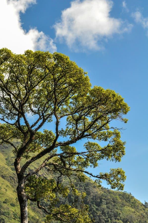 Duży niebieskie niebo i drzewo obraz stock