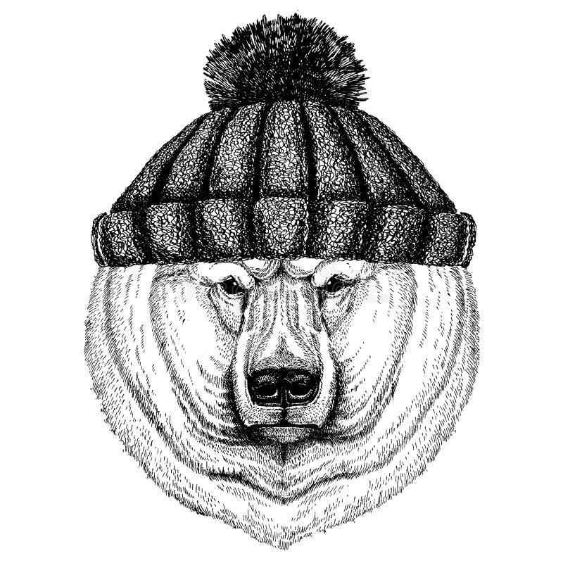 Duży niedźwiedź polarny, Białego niedźwiedzia Chłodno zwierzę jest ubranym trykotowego zima kapelusz Ciepła pióropuszu beanie boż ilustracja wektor