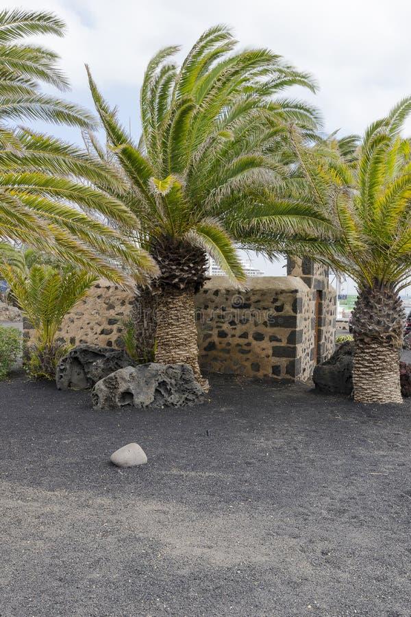 duży palmy fotografia stock