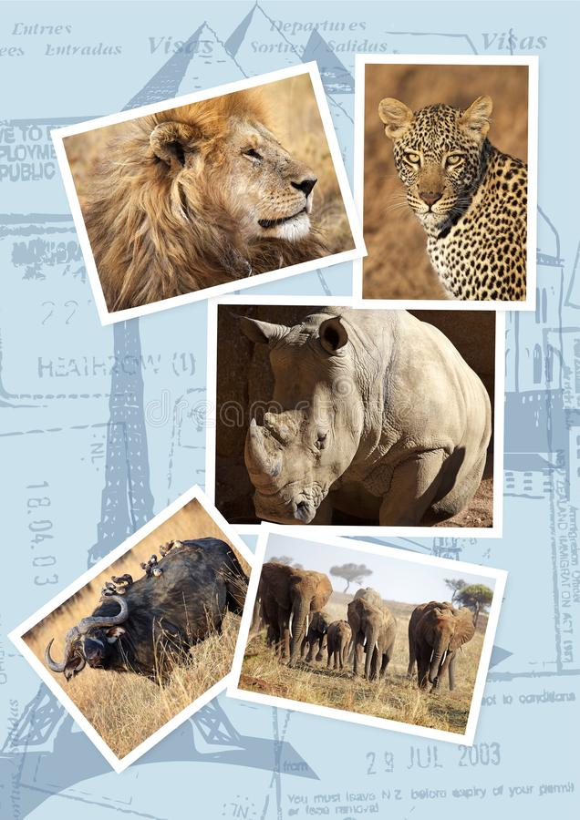 Duży Pięć podróży szablon zdjęcia royalty free