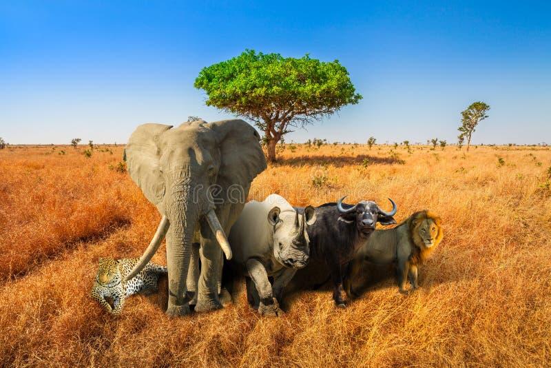 Duży Pięć safari zdjęcie royalty free