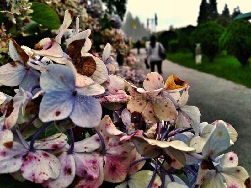 Duży Piękny colour bogactwo uprawia ogródek z udziałami zieleń fotografia royalty free