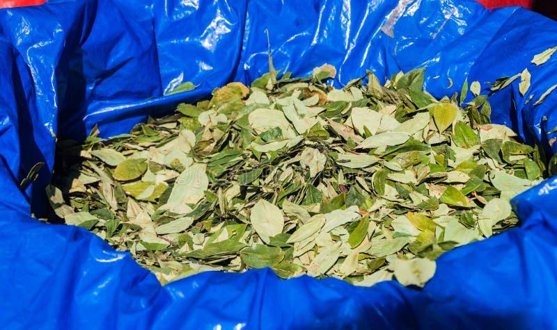 Duży plastikowy worek koka liście zdjęcia stock
