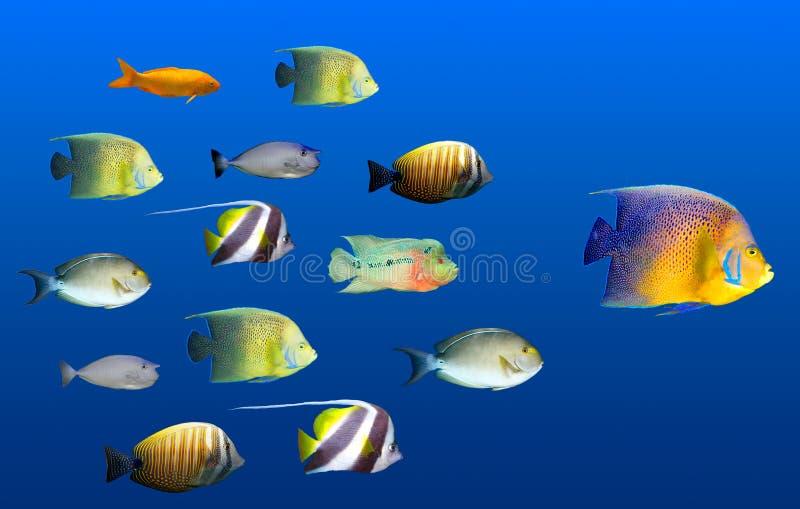 duży pojęcia ryba przywódctwo target2432_0_ obraz stock