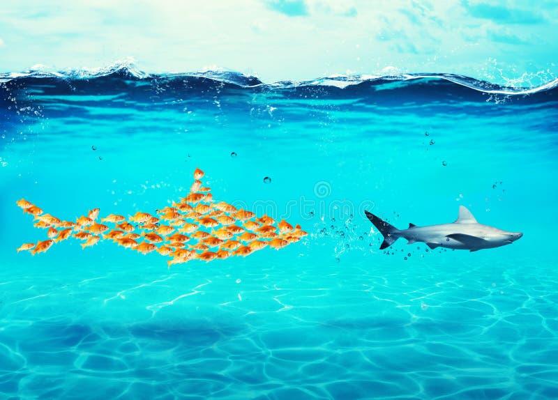 Duży rekin robić goldfishes atakuje istnego rekinu Pojęcie jedność jest siłą, pracą zespołową i partnerstwem, obraz stock