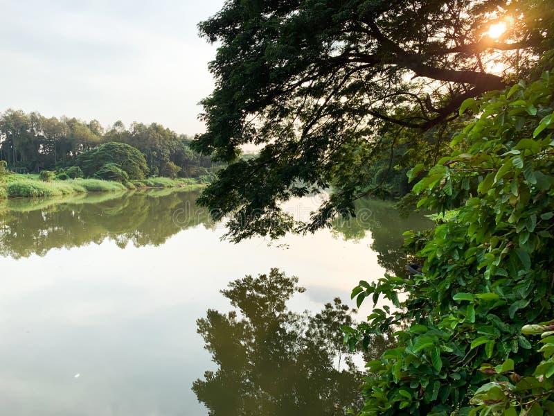 Duży rzeki i drzewa tło obrazy royalty free