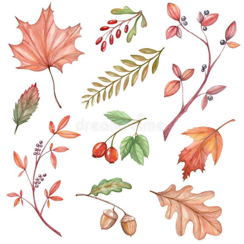 Duży set akwareli ilustracje z jesień liśćmi ilustracji