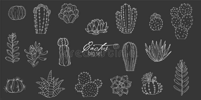 Du?y set elementy z r?ka rysuj?cymi sukulentami na chalkboard tle i kaktusami ilustracja wektor