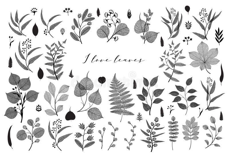 Duży set gałąź i liście, spadek, wiosna, lato Rocznik botaniczna ilustracja, kwieciści elementy w czarnym projekcie ilustracja wektor