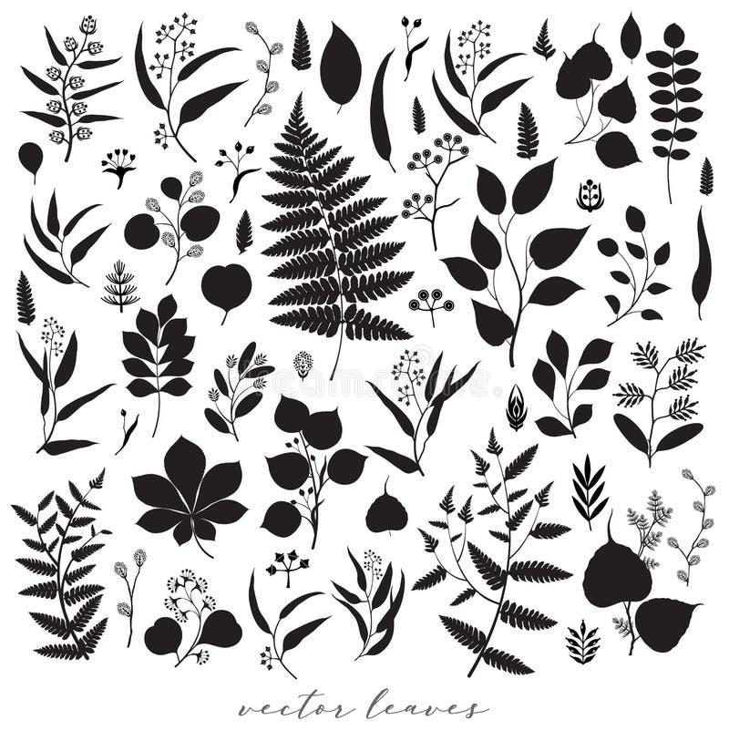 Duży set gałąź i liście, spadek, wiosna, lato Rocznik wektorowa botaniczna ilustracja, kwieciści elementy w czarnym projekcie royalty ilustracja