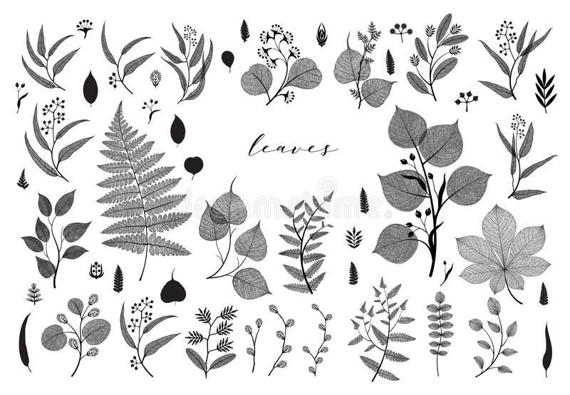 Duży set gałąź i liście, spadek, wiosna, lato Rocznik wektorowa botaniczna ilustracja, kwieciści elementy w czarnym projekcie ilustracji