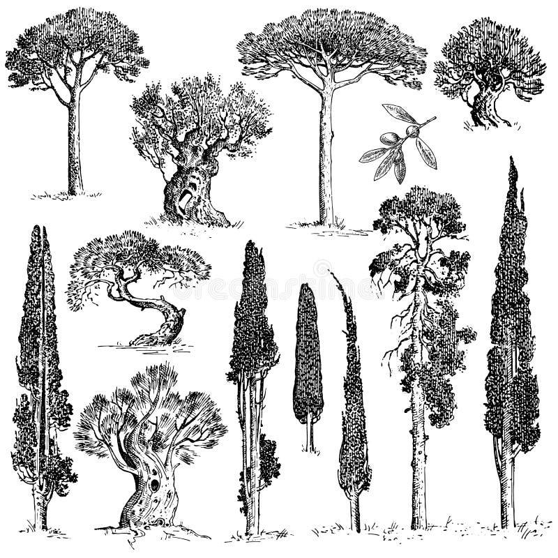 Duży set graweruje, ręki rysujący drzewa zawiera sosny, oliwki i cyprysu, jedlinowego drzewa lasowy przedmiot royalty ilustracja