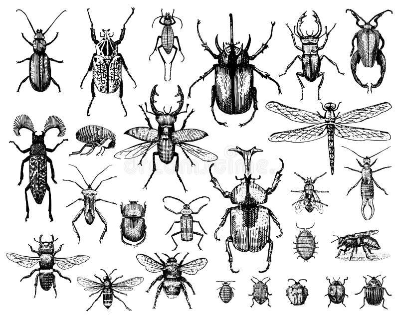 Duży set insekt pluskw pszczoły i ścigi wiele gatunki royalty ilustracja
