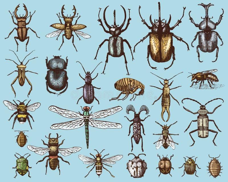 Duży set insekt pluskw pszczoły i ścigi wiele gatunki w rocznika stary wyga rysującym stylu grawerował ilustracyjnego woodcut ilustracji