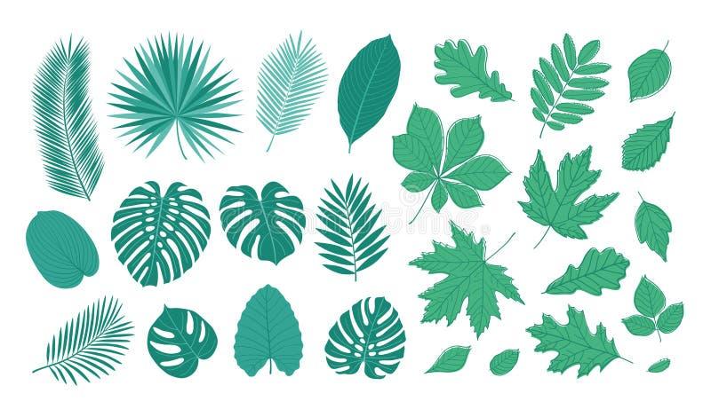 Duży set lato liście ilustracji