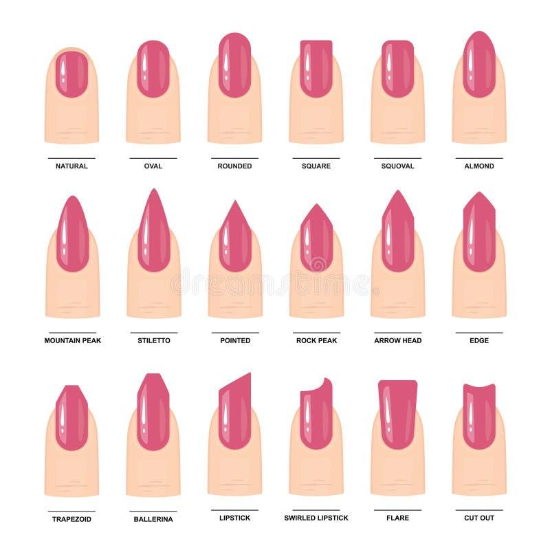 Duży set Różni gwoździ kształty Manicure'u przewdonik wektor ilustracja wektor