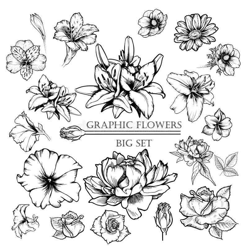 Duży set wektorowy atrament kwitnie ilustrację: leluja, maczek, peonia, wzrastał, petunia, chamomie, alstroemeria ilustracja wektor