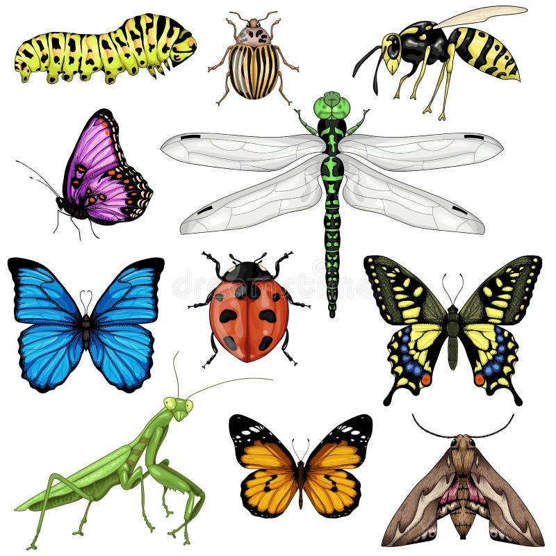 Duży set z insektami na białym tle royalty ilustracja