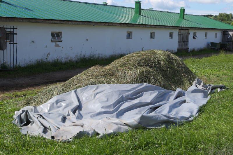 Duży stos siano który suszy w słońcu obrazy stock