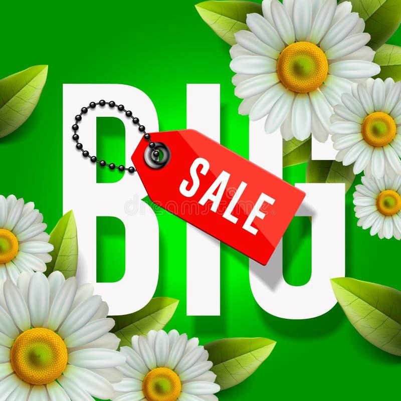 Duży wiosny sprzedaży plakat, zielony tło z stokrotką kwitnie, wektorowy wizerunek royalty ilustracja