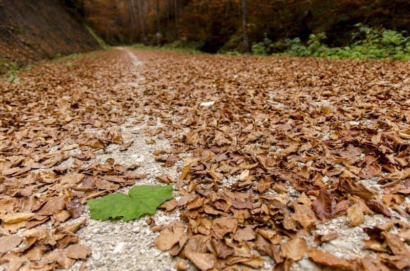 Duży zielony liść wśród ośniedziałej czerwieni opuszcza w jesieni na alei obraz royalty free