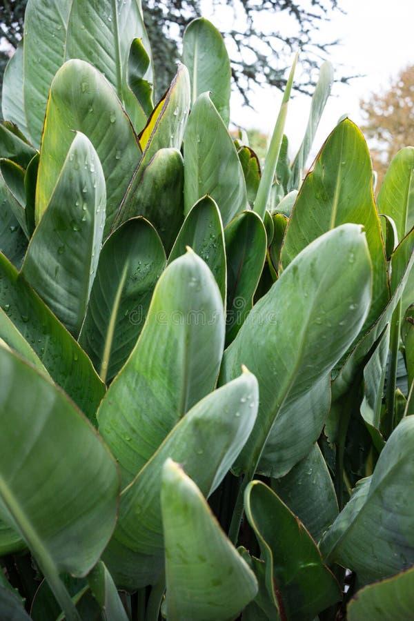 Duży zielony liść z małymi raindrops obraz stock