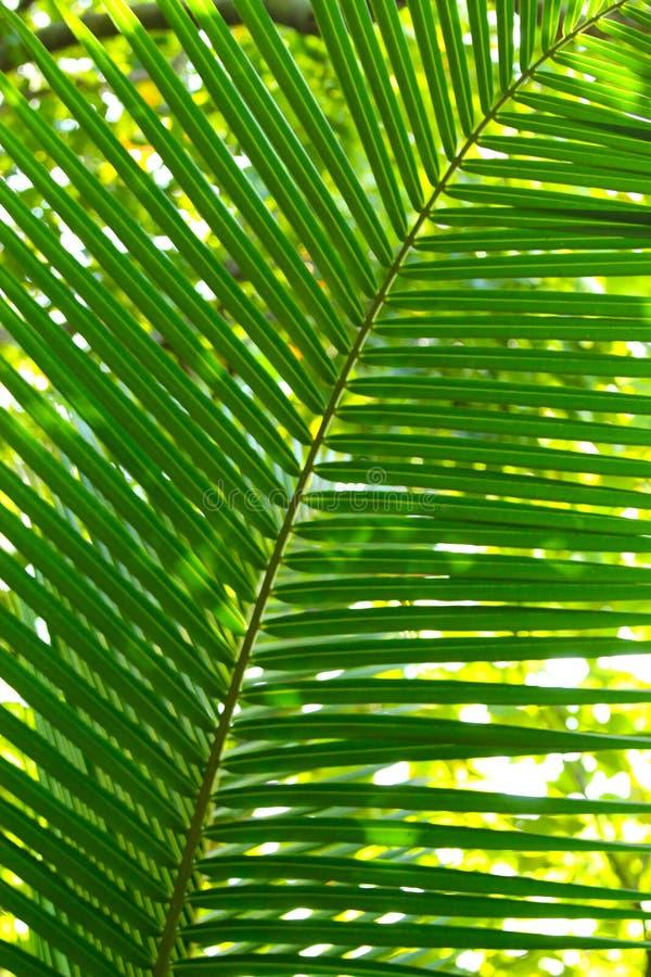 Duży zielony urlop zdjęcia stock