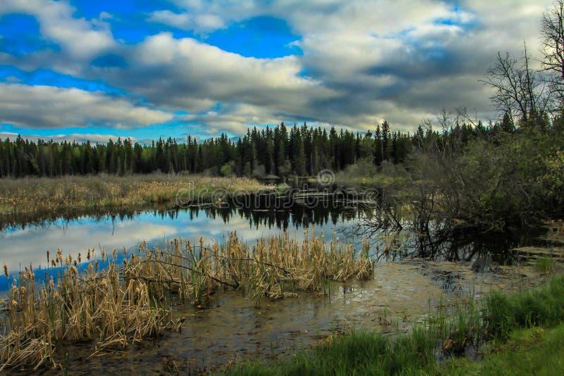 Du bord de la route, parc national de monte de montagne, Manitoba, Canada images stock