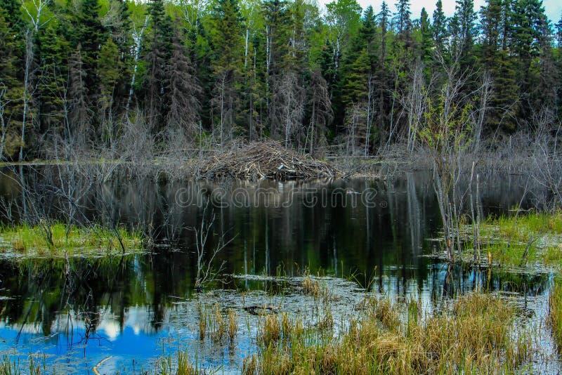 Du bord de la route, parc national de monte de montagne, Manitoba, Canada photo stock
