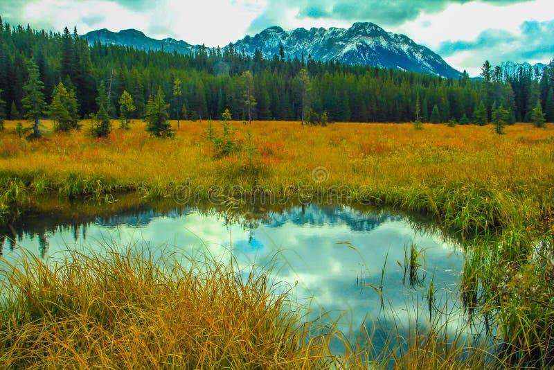 Du bord de la route, Peter lougheed le parc provincial, Alberta, Canada photo stock
