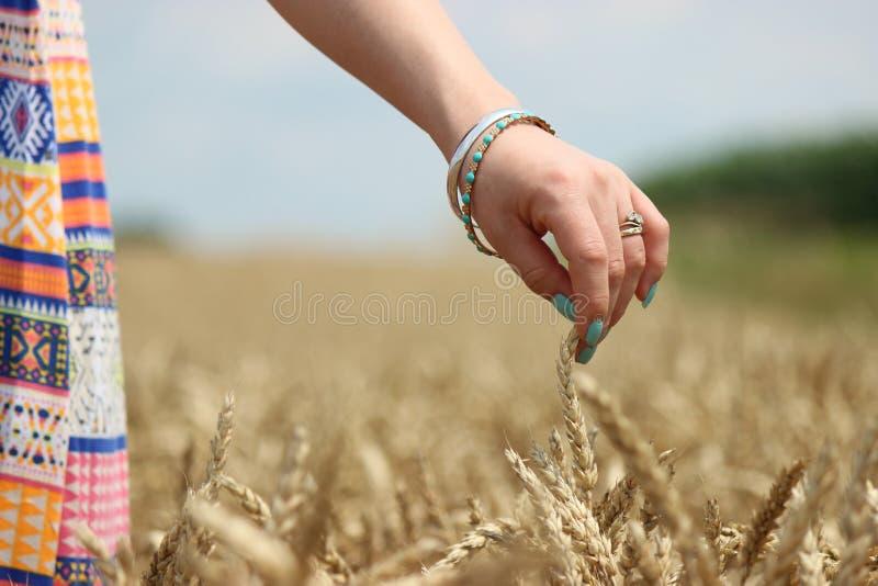 Du champ à la farine images stock