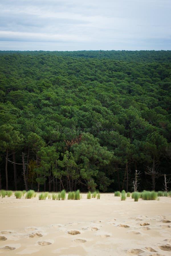 du dune pilat στοκ εικόνα με δικαίωμα ελεύθερης χρήσης