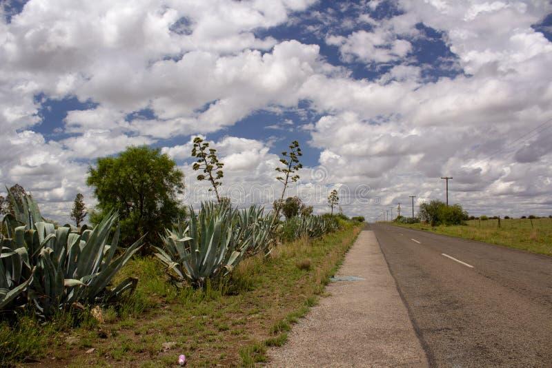 Du?e agaw ro?liny z wysokimi kwiatami pod chmurnym niebem - typowy krajobraz Vrystaat, prowincja Po?udniowa Afryka fotografia stock