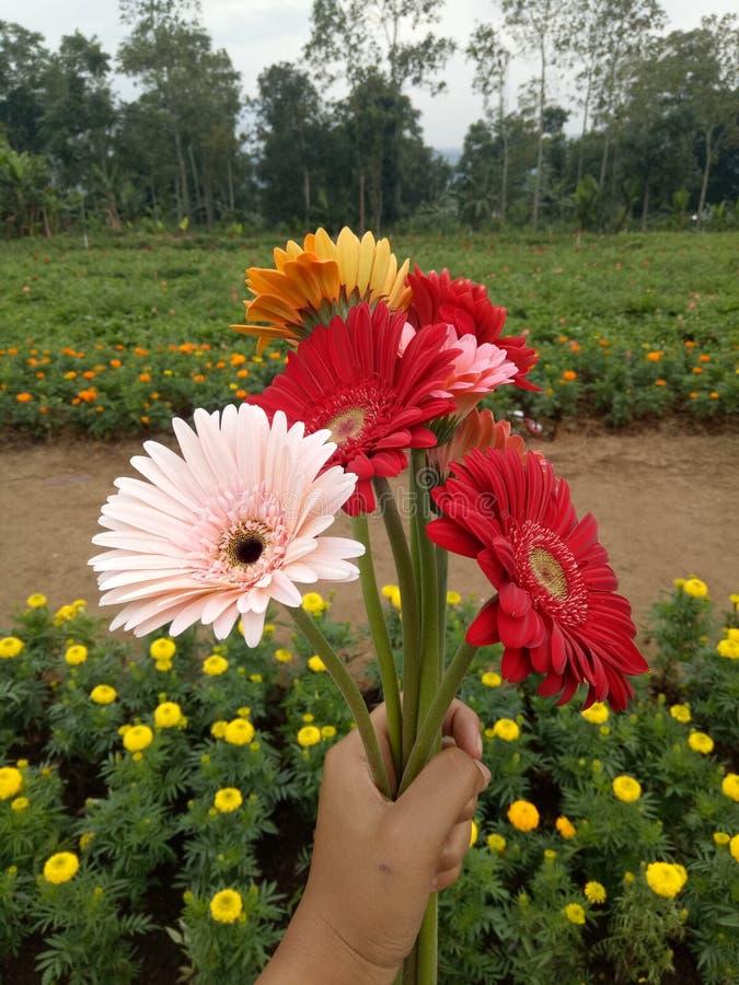 Du gillar en blomma arkivfoton