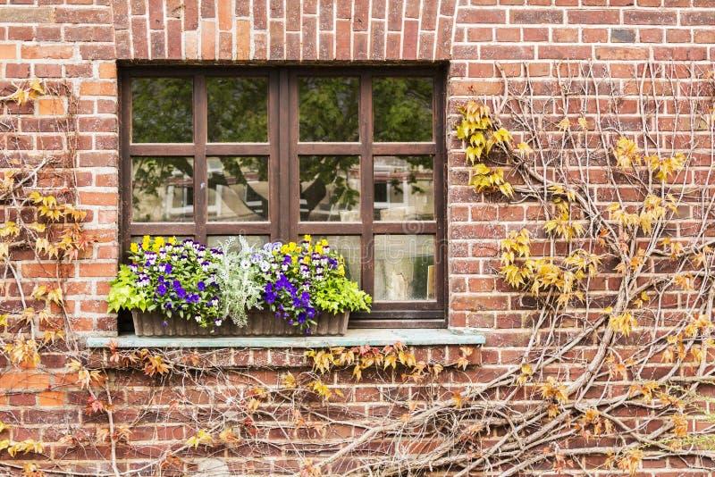 Du lierre encadré fenêtre photos stock