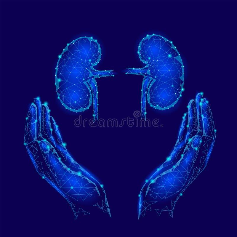 Du monde de rein de jour de carte de voeux poly calibre de conception bas Banney humain d'organe interne d'affiche promotionnelle illustration de vecteur
