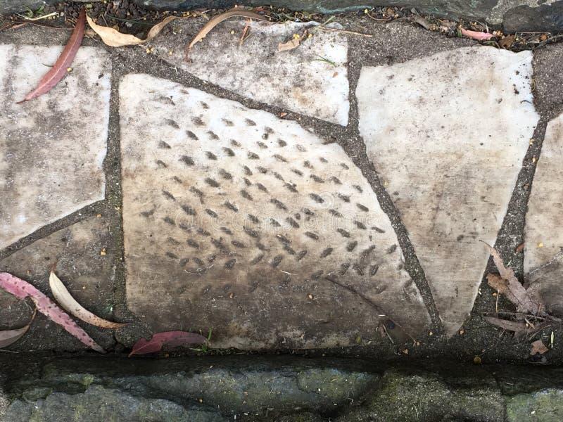 Du pavé topiaire de pierre tombale de cimetière, 11 photos libres de droits