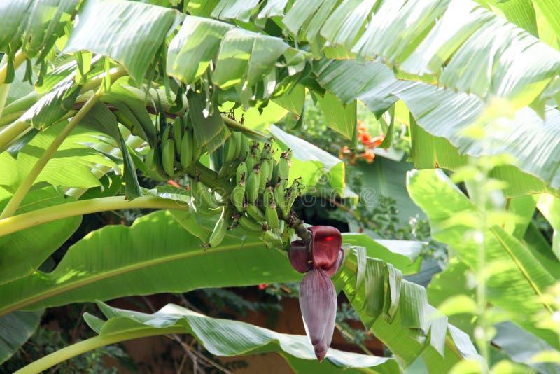 Du sud, fleurs, bananes images libres de droits