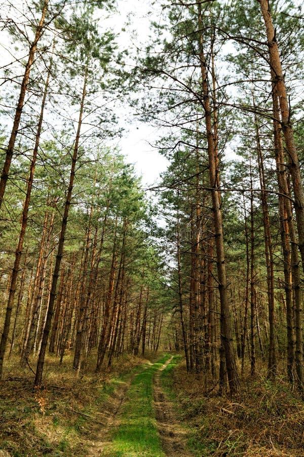 Download Duży las zdjęcie stock. Obraz złożonej z wiejski, środowisko - 41953690